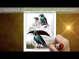 bird coloring book birds paradise coloring pages adults