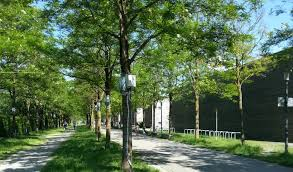 cool trees trees with grassy areas help keep cities cool during summer earth com