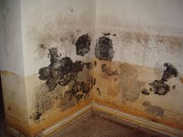 reasons not to diy hire a professional to repair a moldy basement