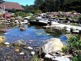 top 4 pond problems and solutions sweetwater landscape