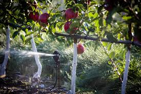 photographs nelson irrigation
