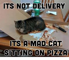Mad Cat Memes - its not delivery its a mad cat sitting on pizza 0 pizza meme on me me