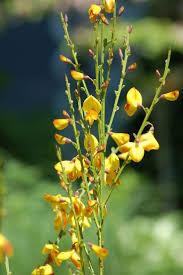 Heat Resistant Plants Best 25 Drought Resistant Plants Ideas On Pinterest Drought