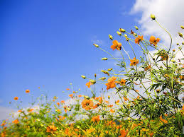 sky and spring flower hd wallpaper flowers wallpapers