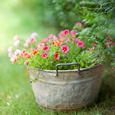 plant and garden ideas for your home love home designs