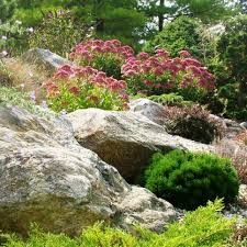 low water rock gardens hgtv