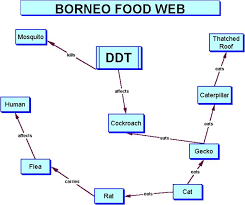 what travels through a food chain or web images Ddt 39 s effect on the food web jpg