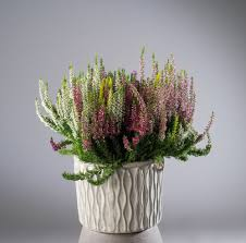 G Stige K Hen Online Pflanzen Online Kaufen Pflanzmich Garten Online Shop