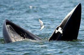 Whaling Meme - create meme whale and seagull whale and seagull kit whale