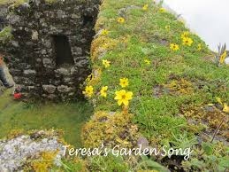flowering native plants teresa u0027s garden song wildflowers and native plants of peru a