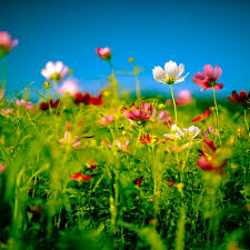 wild summer flowers beautiful retina ipad wallpapers