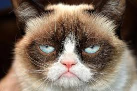 Meme Generator Grumpy Cat - grumpy cat not amused meme generator imgflip