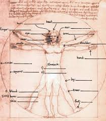 parts of the body worksheet