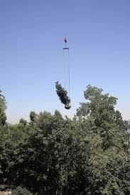 transplanting native plants best 25 tree transplanting ideas on pinterest organic gardening