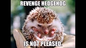 Cutest Memes - top 10 cute hedgehog pictures or memes youtube