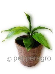 buy coco fiber pots gardening plants planters biodegradable home