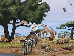 Tropical Savanna Dominant Plants - african savanna national geographic society