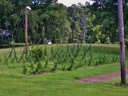 hops central virginia ag spotlight