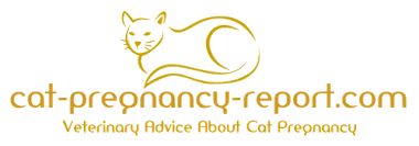 cats afterpains mother cat is not eating after giving birth cat pregnancy report com