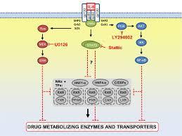 coordinating role of rxrα in downregulating hepatic detoxification