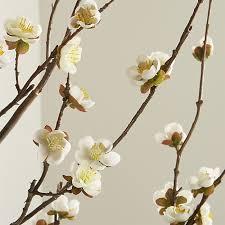white cherry blossom white cherry blossom flower branch in botanicals plants