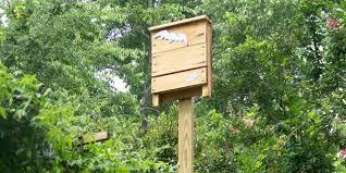 bat houses a natural mosquito control method garden culture