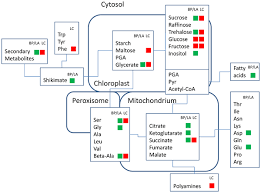 metabolomics unravel contrasting effects of biodiversity on the