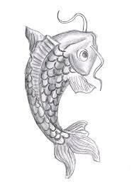 koi fish drawing 8 good koi fish drawings biological science