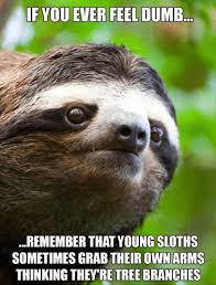 Cute Sloth Meme - search results for tag sloth