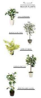 must buy a few different house plants thanks for ideas emily