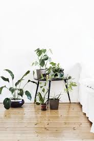 the moodboard going green amazing indoor plants are your