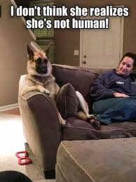 T Dog Meme - 101 funny dog memes that may make you tinkle a little