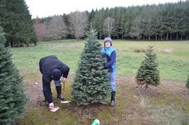south north south cutting the perfect christmas tree 2015