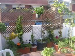 sichtblende balkon balkon sichtschutz mit pflanzen natur pur auf dem balkon