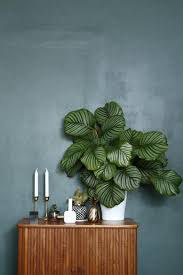 large houseplants decorating with houseplants rc willey blog