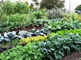 Veggie Garden Ideas Winter Veggie Garden Nightcore Club