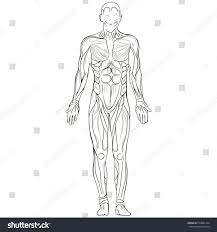vector illustration silhouette human body sketch stock vector