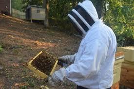 Backyard Beehive Bee Story Weld Birmingham U0027s Newspaper