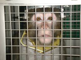 experiments on animals overview peta