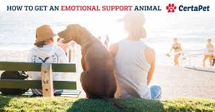 Comfort Dogs Certification 2017 Update How To Get An Emotional Support Animal