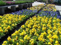 gardening tips for september 2017 evergreen nursery
