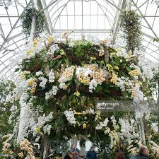 Botanical Garden In Bronx by The Orchid Show Chandeliers Photos And Images Getty Images