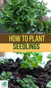 Herbs Indoors 402 Best Garden Seeds U0026 Propogation Images On Pinterest
