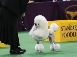 westminster kennel club show tickets event dates schedule