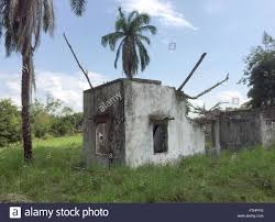house 1985 palm trees growing in the ruins of a house in armero columbia 29
