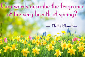 beautiful spring 27 beautiful spring quotes to brighten your day