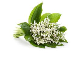 Lily Of The Valley Flower Lily Of The Valley Glade Fragrances