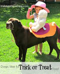 Big Dog Halloween Costume 40 Adorable Diy Pet Costume Ideas Halloween