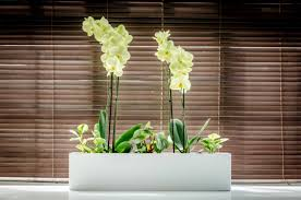 the plant pot shop indoor planters and window boxes for home or