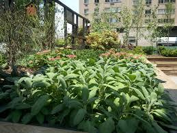 phs pop up garden and square 1682 u2013 veggicurious